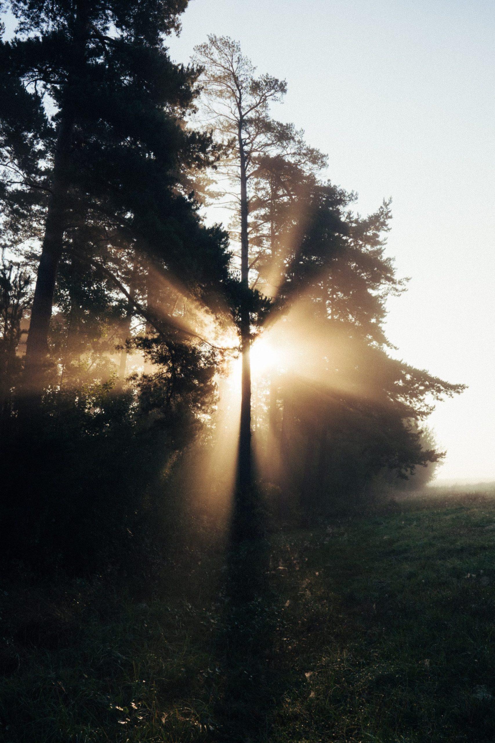 licht, light, jesus, jezus
