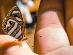 Lume, Woman, Butterfly